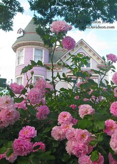 Pink Roses in front of Victorian Home I still believe BARBIE lives in this Pink victorian home! It just keeps getting better with the beautiful pink roses Beautiful Pink Roses, Pink Love, Pretty In Pink, Romantic Roses, Beautiful Things, Rosa Rose, Colorful Roses, Painted Ladies, Victorian Houses