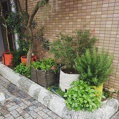Petite jungle de pots en g otextile 50l et de petit potager bacsquare 4 id al pour habiller le - Piscine dans petit jardin de ville saint paul ...