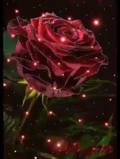 Rosas Hermosas Discover I love her Awe this is so sweet. Beautiful Photos Of Nature, Love You Images, Beautiful Flowers Pictures, Beautiful Rose Flowers, Beautiful Flowers Wallpapers, Beautiful Gif, Flower Pictures, Good Night Gif, Good Morning Gif