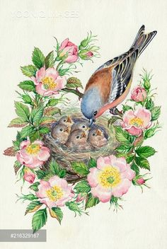 PortForLio - Chaffinch feeding young in nest with wild roses Bird Drawings, Cute Drawings, Bird Illustration, Illustrations, Bird Coloring Pages, Bird Artwork, Watercolor Bird, Vintage Birds, Bird Prints