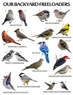 We have all of these! Attract backyard birds to save birdlife and enrich your life.  #WildBirdScoop #wildbirds #birdwatching #birding #attractingbirds