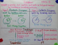 Enzymes GLAD anchor chart - Scientific Gladiators: Chart Examples - Biology by Mrs. Paul