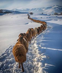 Follow @travels.destination For more nature Photo and Travel photos @travels.destination @travels.destination  Turkey Bingol / Photography By @kenanihatelci ...... #amazingglobepix by amazing.globepix