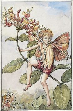 Cicely Mary Barker - Flower Fairies of the Summer