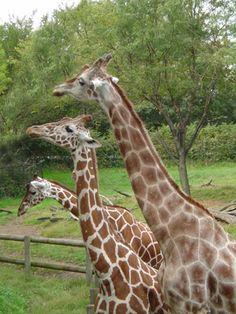 Blank Park Zoo, Des Moines, IA