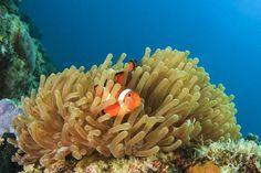 映画でお馴染みの「ニモ」も見ることができます。サンゴ礁の中に隠れたり、ひょっこり出てきたり、その姿はやっぱり可愛い!