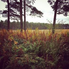 Forest and field...