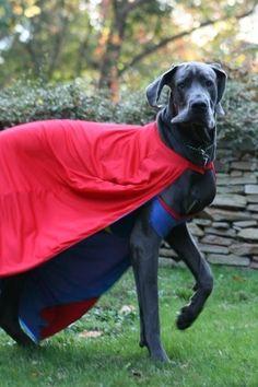 Super Hero Great Dane Costume                                                                                                                                                                                 More