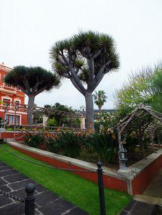 Jardines Victoria, La Orotava. Tenerife. Islas Canarias. Spain.  [By Valentín Enrique].