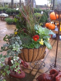 Fall Plants in Iron Hanging Basket