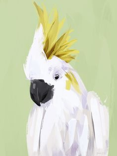 Varick Gallery 'Flocks & Herds - The Cockatoo' Acrylic Painting Print Size: H x W, Material: Wrapped Canvas Bird Paintings On Canvas, Bird Painting Acrylic, Parrot Painting, Bird Artwork, Acrylic Painting Canvas, Animal Paintings, Art Paintings, Animal Drawings, Painting Prints