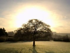 The Shortest Day - Winter Solstice
