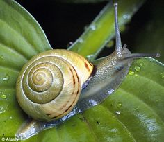 Learn how to get rid of Slugs and Snails in your Garden with the advice and tips in this handy Garden Pests Guide. Slugs In Garden, Garden Pests, Lawn And Garden, Garden Insects, Organic Soil, Organic Gardening, Gardening Tips, Grow Organic, Getting Rid Of Slugs
