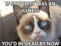 Grumpy cat, grumpy cat meme, grumpy cat humor, grumpy cat quotes, grumpy cat funny … For the funniest memes and jokes visit www.bestfunnyjokes4u.com/rofl-funny-pic-of-the-day-8/
