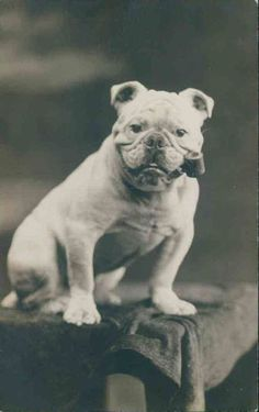 vintage everyday: When Dogs Are As People – Funny Vintage Photos of Dogs Smoking Pipes