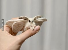 The Venezuelan Poodle Moth is the most aww-some bug I've ever seen