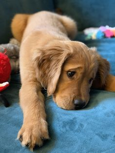 Things that make you go AWW! Like puppies, bunnies, babies, and so on. A place for really cute pictures and videos! Cute Baby Dogs, Cute Dogs And Puppies, Baby Puppies, I Love Dogs, Doggies, Cute Funny Animals, Cute Baby Animals, Beautiful Dogs, Animals Beautiful