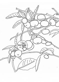 Mandarin Orange Tree fruit coloring page for kids, fruits coloring pages printables free - Wuppsy.com