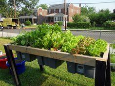 raised self watering plant bed