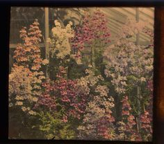 from the George Eastman House Collection - Autochrome color plate
