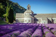 Sénanque Abbey, Vaucluse - Located in southern France, near the equally beautiful village of Gordes, the Abbey is surrounded by lovely lavender fields.