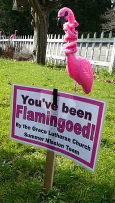flamingofundraiserletter youve been flamingoed said the sign near