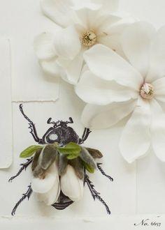 Magnolia beetle Kari Herer