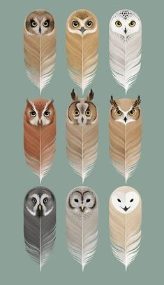 35 trendy ideas for tattoo cute owl birds Feather Painting, Feather Art, Feather Tattoos, Bird Kite, Owl Bird, Owl Pictures, Owl Always Love You, Beautiful Owl, Owl Crafts
