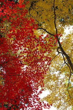 Dyed autumn