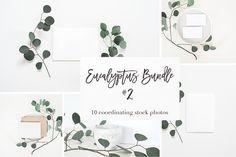 Stock Photos | Eucalyptus Bundle #2 - Product Mockups