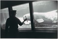 Garry WINOGRAND :: Whale in Aquarium, 1963