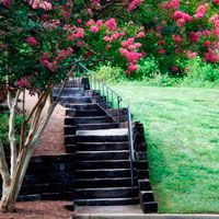 Texas plants that bloom all summer...like the Crepe Myrtle! Learn how to keep your Texas garden colorful in the hottest season of the year.  www.calloways.com