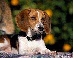 Cele mai frumoase poze cu rase de caini cum rar se vede pe internet, website online cu imagini deosebit de frumoase cu animale domestice pentru iubitori de animale de companie aici aveti cateva...