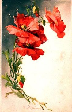 Catherine Klein poppies