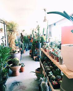 shopping at ponderosa cactus store in highland park / sfgirlbybay