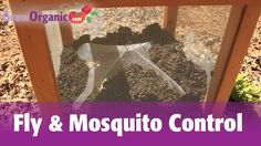 How to Get Rid of Flies & Mosquitoes Organically