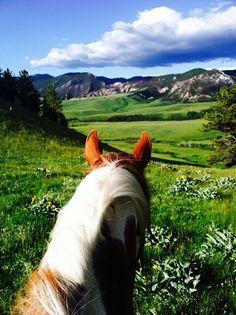 Through the ears at HF Bar Ranch in Saddlestring, Wyoming.