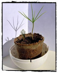 Tree kit ForestNation You plant one We plant one #imagineforestnation