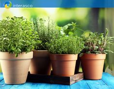 Health Tips, Planter Pots, Healing, Herbs, Herb, Healthy Lifestyle Tips, Medicinal Plants