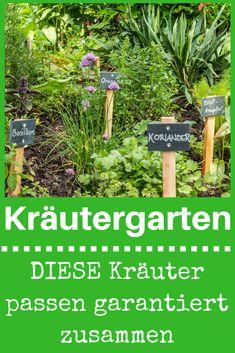 Einen Kräutergarten kannst du beinahe überall anlegen – im Garten in der Kräuterschnecke, im Hochbeet oder in Töpfen oder gleich auf dem Balkon oder in der Küche. Dabei kommt es jedoch auch immer darauf an, welche Kräuter zusammenpassen. Klicke hier und erfahre, welche Kräuter zusammengehören und welche auf gar keinen Fall zusammengepflanzt werden sollten! #kräuter #kräutergarten #kräuterbeet #garten #balkon #küche #basilikum #thymian #salbei #selbst