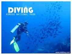 Diving Komodo National Park, Indonesia