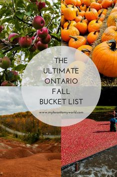 Ontario Fall Bucket List: 18 Things To Do In Ontario This Fall The Ultimate Ontario Fall Bucket List with a huge list of things to do in Ontario this fall Stuff To Do, Things To Do, Ontario Travel, Us Destinations, Travel Inspiration, Travel Ideas, Autumn Activities, Vacation Spots, Vacation Ideas