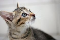 cat photography - Google Search