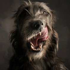 I want an Irish Wolf Hound...so bad.