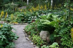 Metsäpuutarhan kivituhkapolku Woodland Garden, Shade Garden, Stepping Stones, Most Beautiful, Shades, Outdoor Decor, Ferns, Rocks, Japanese