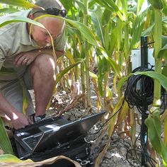 """Kendall DeJonge's mission is to take plants' temperatures. But the crops, like corn, that he is working with don't have to open up and say, """"ahh."""" Instead, DeJonge employs an infrared radiometric thermometer (IRT). This is a simple point-and-detect tool that any farmercould own.The USDA Agriculture Research Service (ARS) engineer, who works out of Colorado, is developing a simple way that farmers canuse IRT to pinpoint when a crop needs to be irrigated."""