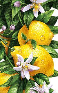 Рисунки и иллюстрации художников на заказ - iNORAMA illustrators