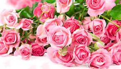https://500px.com/flowercouponcodes/about  Flowers Discount Code - Recommended Site  Discount Flowers,Flowers.Com Coupon,Flower Coupons,Flowers.Com Coupon Code,Flower Deals