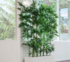 Come arredamento il salotto con le piante n.10