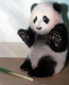 Whoa, whoa, whoa, okay! I took their bamboo... But I asked first!